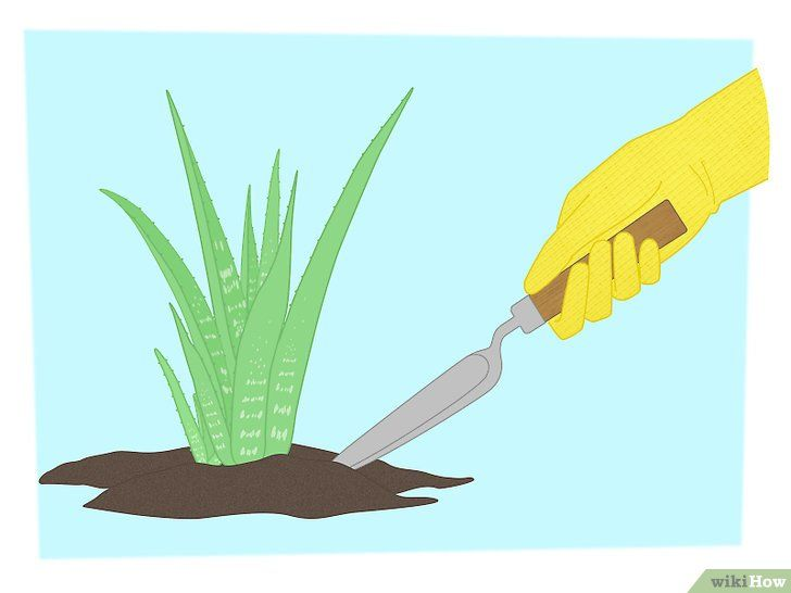 Vermenigvuldig planten