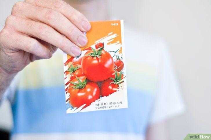 Tomaat uit zaden