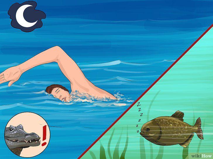 Titel afbeelding Safely Swim with Piranhas Step 3