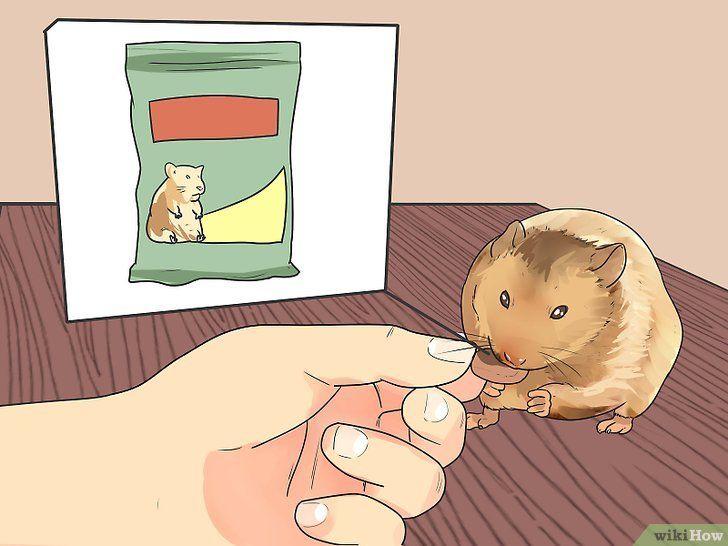 Voer de hamster